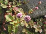 061014 東山植物園 052.jpg