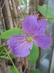 061118 東山植物園 051.jpg